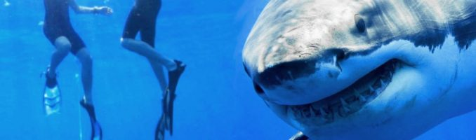 Swimming With Sharks, Part One